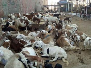 Sudan Feed Factory