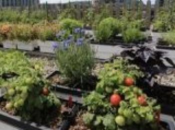 Roof Top Vegetable Garden