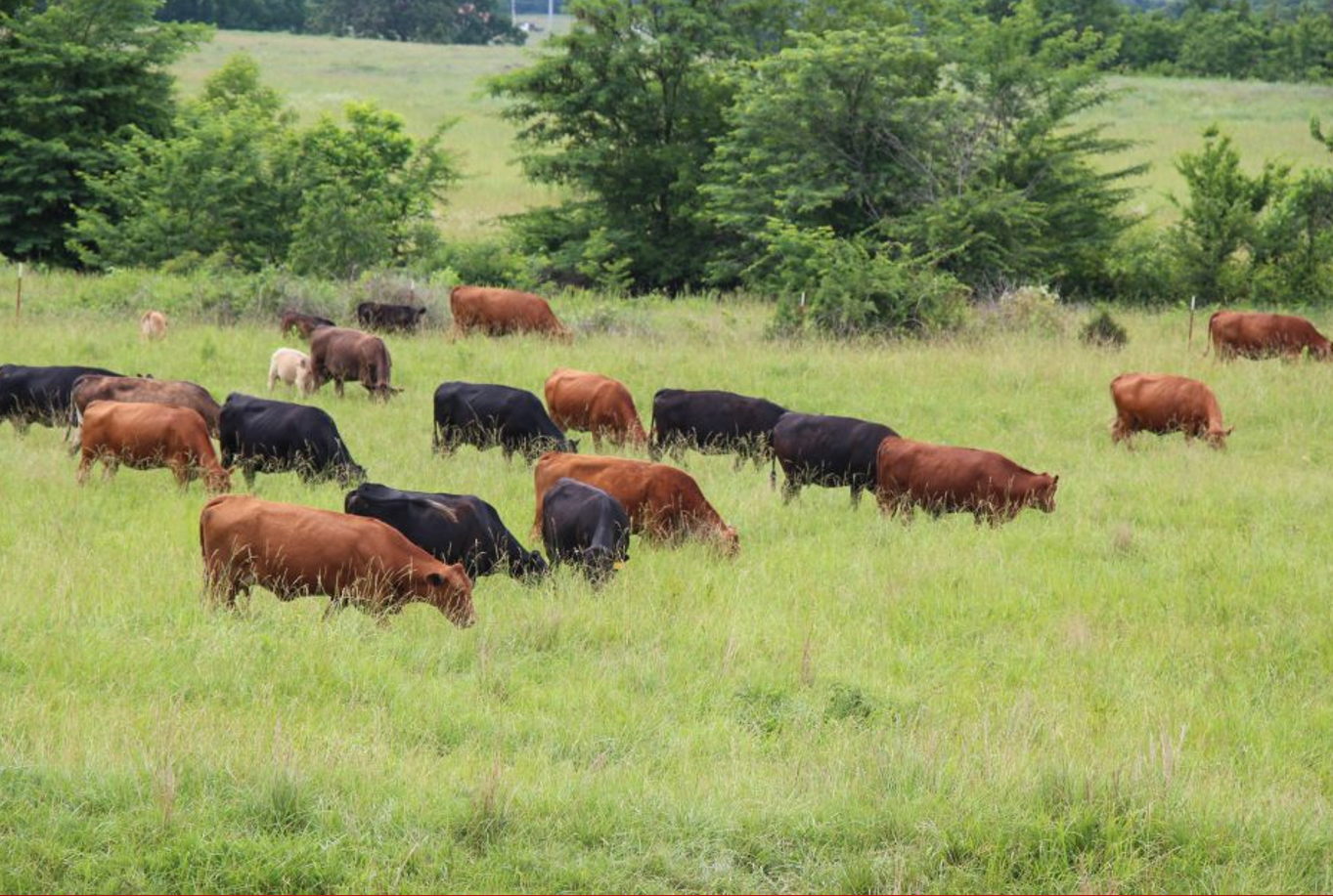 Creating Peace Among African Tribes Through Cattle Zero Grazing