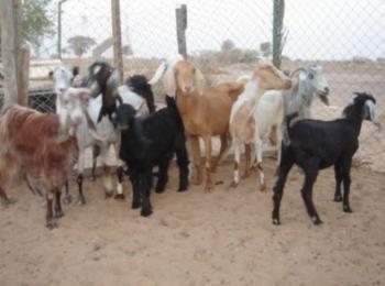 Rural Development Project in Al Sayial Village, West of Shendi